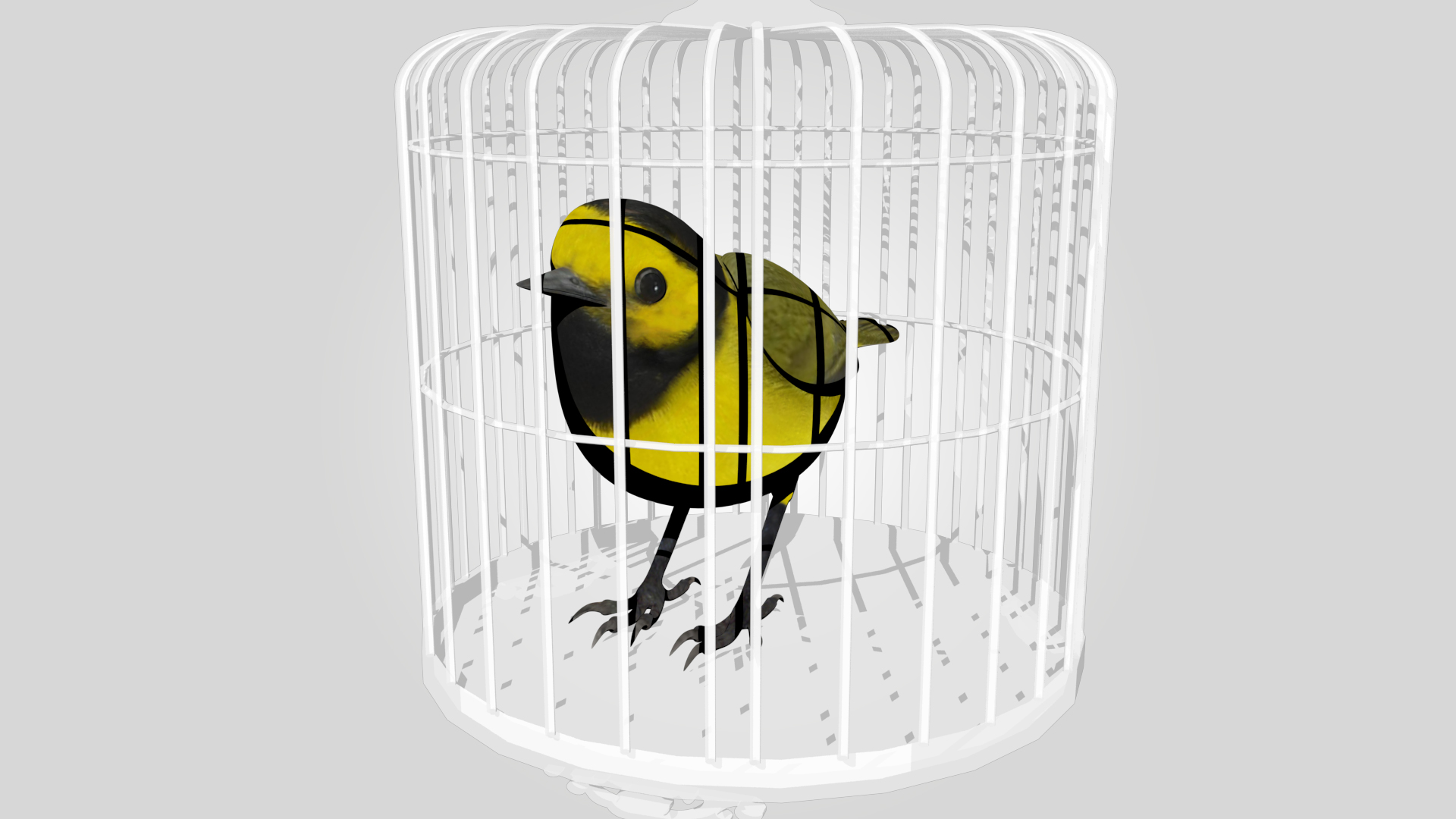 The bird is sitting inside the cage to move to the new home.